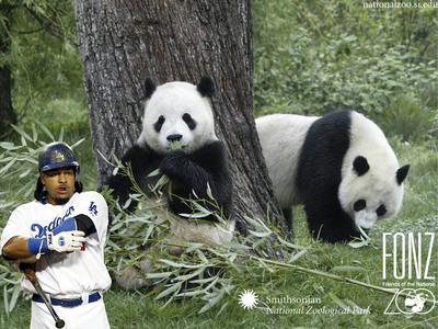 pandas copy.jpg